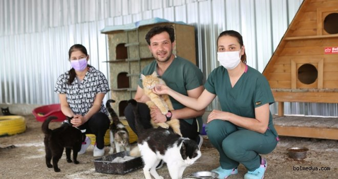 'Kedi Beslenme ve Sığınma Evi' Engelli Kedilere Yuva Oluyor